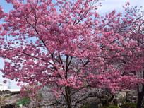 粉色花摄影图
