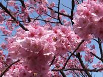 花卉摄影图