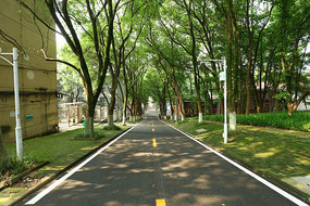 华中农业大学的林荫道