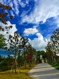 蓝天下的两排树