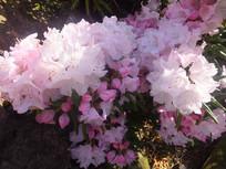茂盛的花朵