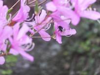 漂亮的粉色花卉