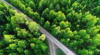 森林山路景观 航拍