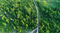 森林之路 航拍