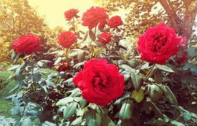 阳光下的花朵