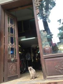 越南-河内古董店的暹罗猫
