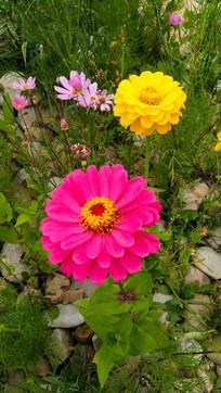 两朵鲜艳夺目的小花
