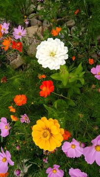 色彩艳丽的小花