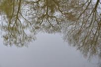 水面树木倒影