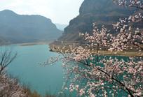春天的太行山水花开美景