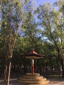 公园树林边小亭子