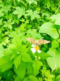 绿草中的蝴蝶