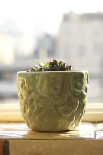 浅绿纹多肉盆花