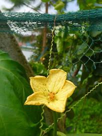 一朵黄色花