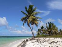 海滩椰子树