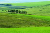 绿色浓郁的原野