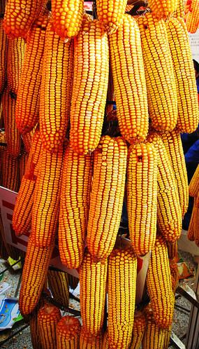 一串玉米棒子