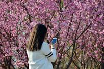 春天里赏花拍照的少女背影