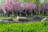 春天里桃花下赏花的游人