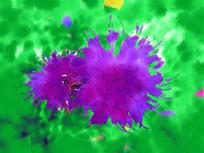 电脑画《花朵》