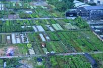 花田风景图片