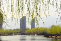 春天里的城市美景
