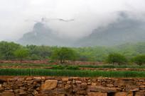 农田植被与大山云雾