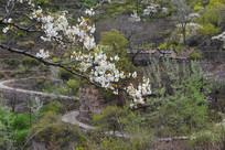 太行山的春天景色