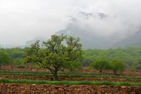 云雾中的太行山植被美景