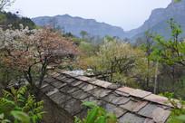 大山里的春天与民房