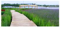 迷人的张掖湿地花湖