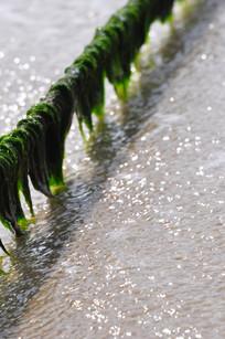 绳索上的海草