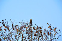 枝头上的一只鸟