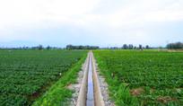 张掖高科技绿色蔬菜基地
