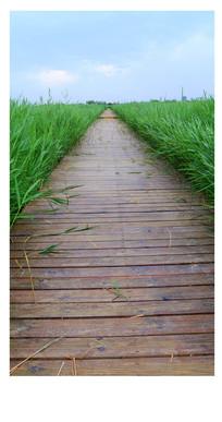 张掖最美湿地栈道