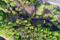 森林中小溪 航拍