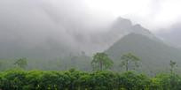 太行山植被云雾景色