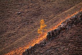 夕照山岩上一棵树