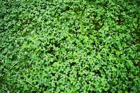 用来做仿真植物门头的草皮照片