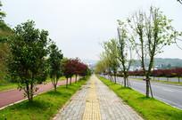 人行道城市绿化