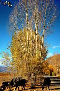 秋天的山村路边