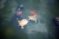 三只小乌龟