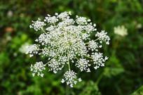 白色花朵和绿色的背景