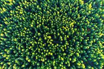 绿色林海景观 航拍