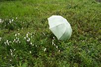 草地上的雨伞