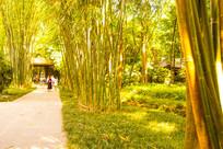 杜甫草堂金色竹林