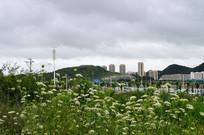 贵阳郊区楼房与盛开的野花