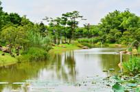 湿地湖泊公园风景图片