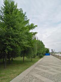 马路边的树木