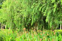 花草树木风景图片